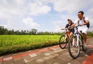 Biking at or in the surroundings of Manyi Village Ubud