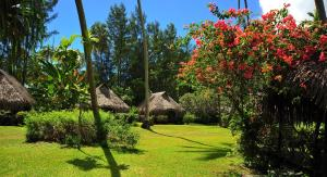 A garden outside Hotel Hibiscus