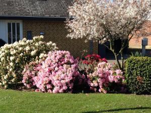 En have udenfor Horsens Room