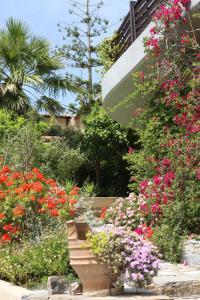 A garden outside Villa Galini