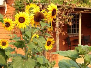 Jardin de l'établissement Gondwana Damara Mopane Lodge