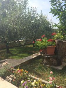 A garden outside Apartments Mirela