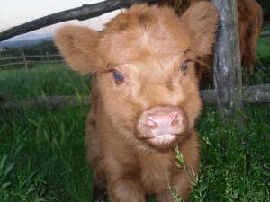 الحيوانات في الإقامة في مزرعة أو بالجوار