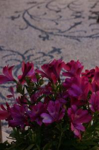 A garden outside Hotel Ellique