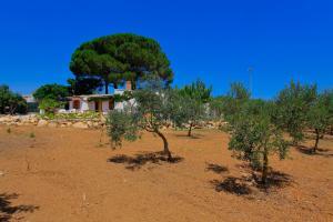 Giardino di Villa 2 Pini