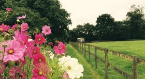 A garden outside Mollies Hut