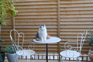 Pet or pets staying with guests at Hotel Du Commerce