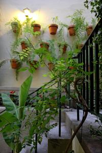 A patio or other outdoor area at 29 Madeira Hostel