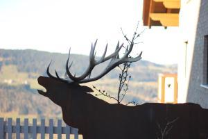 Tiere in der Ferienwohnung oder in der Nähe