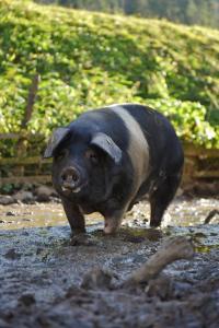 Hišni ljubljenčki, ki bivajo z gosti v nastanitvi Ekološka turistična kmetija pri Lovrču
