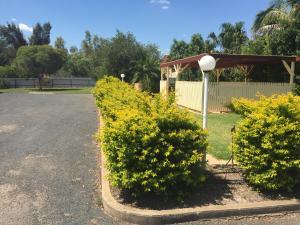 A garden outside Macquarie Valley Motor Inn