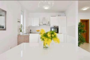 A kitchen or kitchenette at Apartment Haja