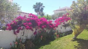 En trädgård utanför El Capistrano Sur