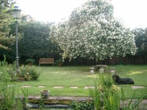 A garden outside Bastgen Bed & Breakfast
