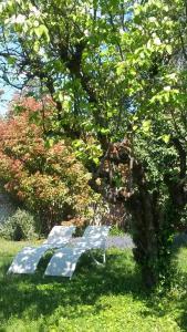 A garden outside B&B Caza Sereyna