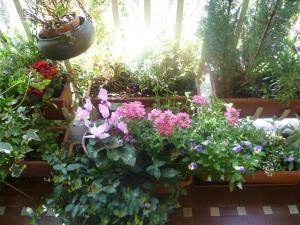 A garden outside La Terrazza Sul Po