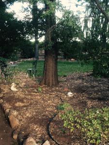 Сад в Catania Cottage & Farmhouse