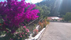 A garden outside Santa Marina Hotel
