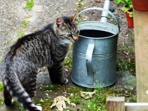 Huisdier of huisdieren van gasten bij Eco-Camping De Helleborus