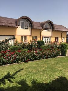 A garden outside Pensiunea Zbor 1