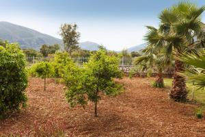 A garden outside Villa Kostoula