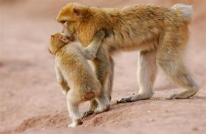 Tiere im Riad oder in der Nähe