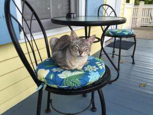 Pet or pets staying with guests at Angelina Guesthouse Adults Only, No Resort Fees
