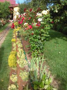 A garden outside Pensiunea Lucia Ana
