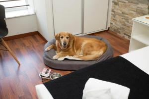 Pet or pets staying with guests at Casual Vintage Valencia