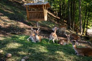 Dieren bij het vakantiepark of in de buurt