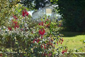A garden outside Malory