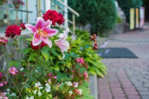 A garden outside Lileya Hotel
