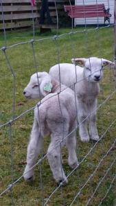 Animal ou animaux domestique(s) séjournant avec des clients dans l'établissement Het Uilenbos