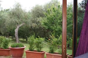 Giardino di Relais Il Monticello