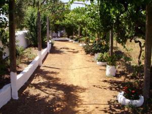 A garden outside Turimenha