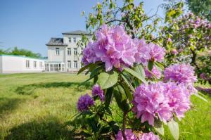Ein Garten an der Unterkunft Hotel Siegmar im Geschäftshaus