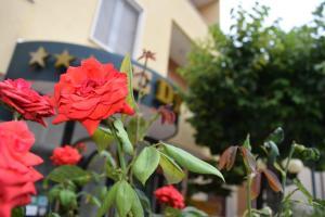 A garden outside Eco-Hotel Edy