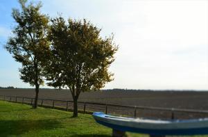 A garden outside Alloggi e Trattoria Agli Alberoni