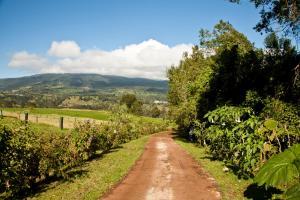 A garden outside Poas Volcano Lodge
