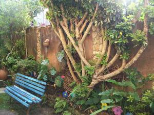 A garden outside Pousada Beija-Flor