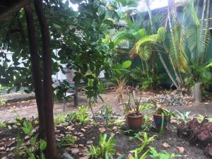A garden outside Cairns City Backpackers Hostel