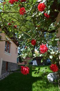 O grădină în afara Casa Camelia