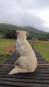 Pet or pets staying with guests at Pai Klang Na