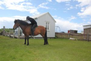 Horseback riding at the vacation home or nearby