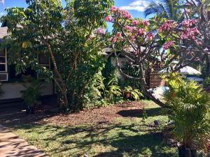 A garden outside Hakuna Matata Maui Hostel
