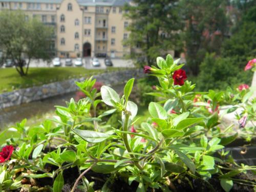 Ein Garten an der Unterkunft bb-Ferienhaus