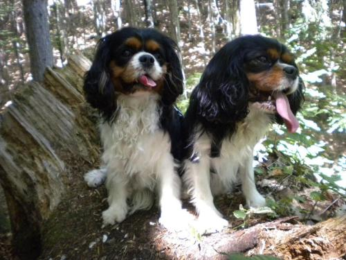 Pet or pets staying with guests at Hotel Sport