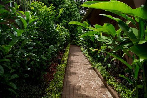 Jardín al aire libre en Hotel Boutique Lagarta Lodge