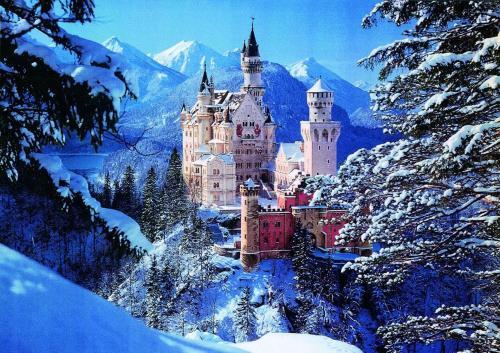Haflingerhof during the winter