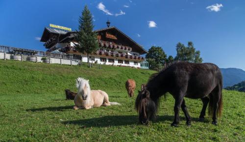 Zvířata v hotelu nebo okolí